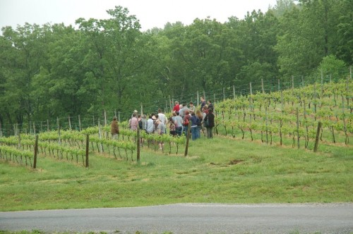 Les campeurs dans les vignes de Linden