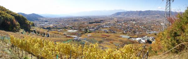 Vignoble de Toriibara, Yamanashi