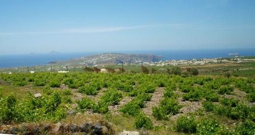 Vignoble de Santorini