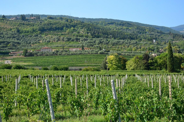 Vignobles autour de Vérone (Source: Paul Arps, Flickr)