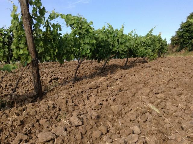 Le sol volcanique du vignoble de Feudo, chez Girolamo Russo