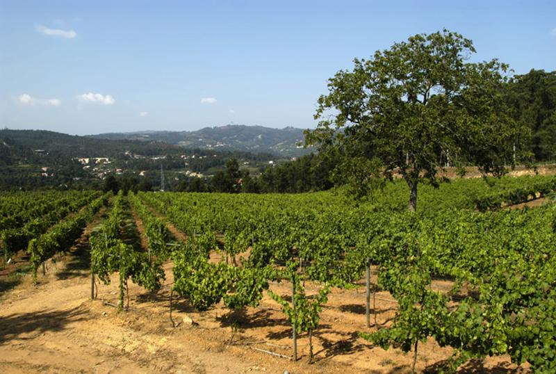 Vignes chez Quinta da Lixa (Photo: http://winesofvinhoverde.com/)