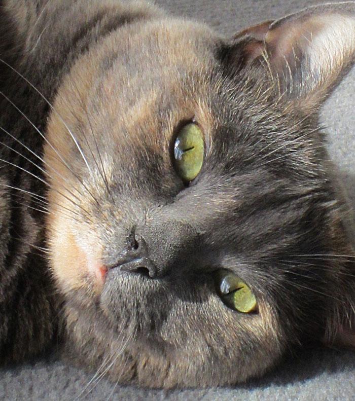 blog beauté chat cute migraine sushi