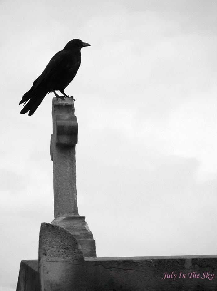 blog beauté photographie art passion cimetière montparnasse paris corbeau