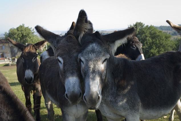 blog beauté les ânes d'autan baume généreux
