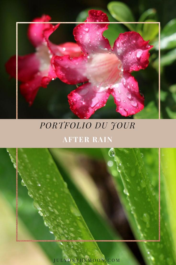 blog photographie portfolio nature fleurs pluie