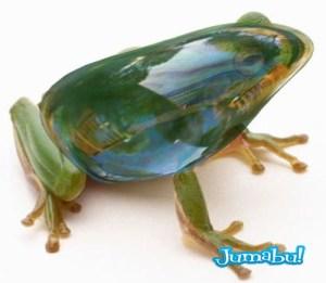 Green tree frog (Hylidae cinerea)