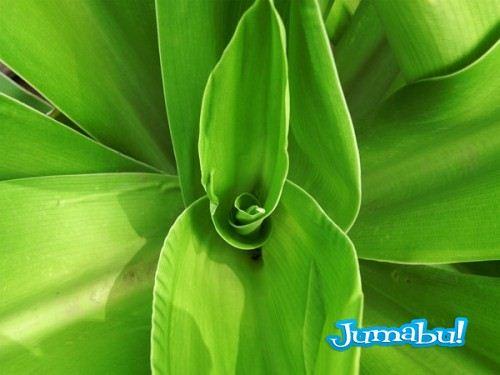 textura-hojas-planta-arbol