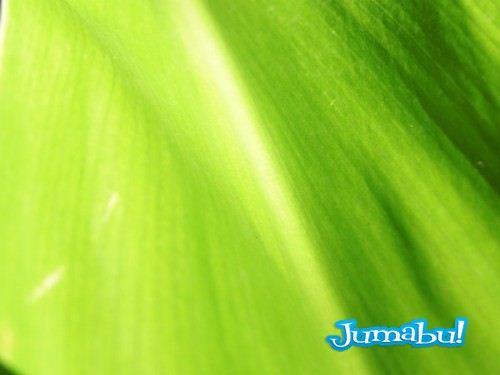 textura-hojas-verdes-jpg-02