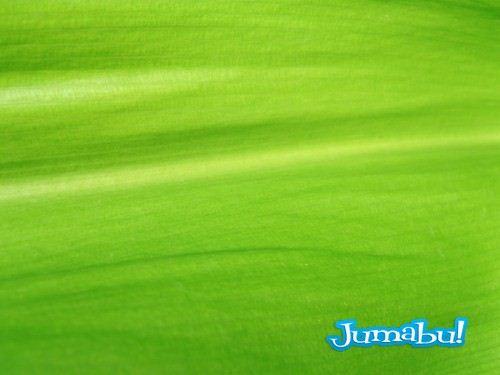 textura-hojas-verdes-jpg-03