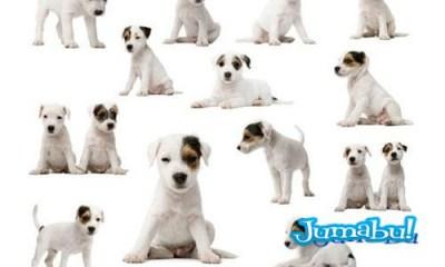 imagenes-dog-doguies