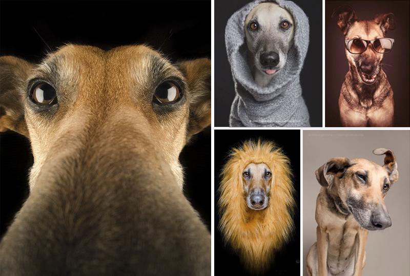 cara-de-perros