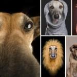 cara de perros - Fotografías con Caras de Perros Super Graciosos