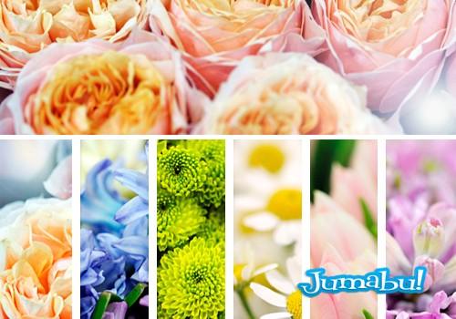 flores hd imagenes gratuitas - Imágenes de Flores en Alta Resolución