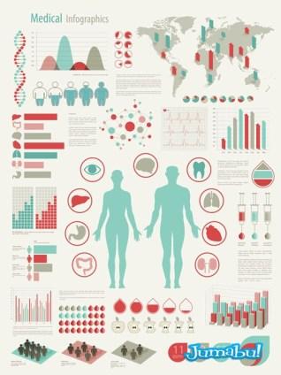 infografia-vida-humana-vectorial
