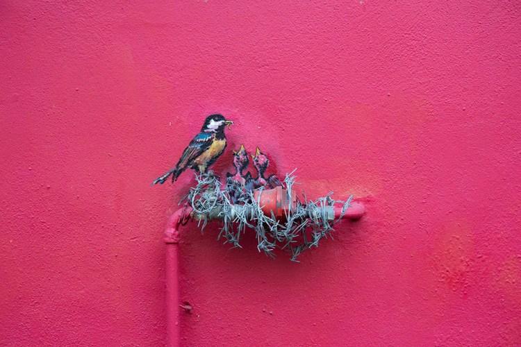 intervenciones-via-publica-grafiti-pajaros-nido