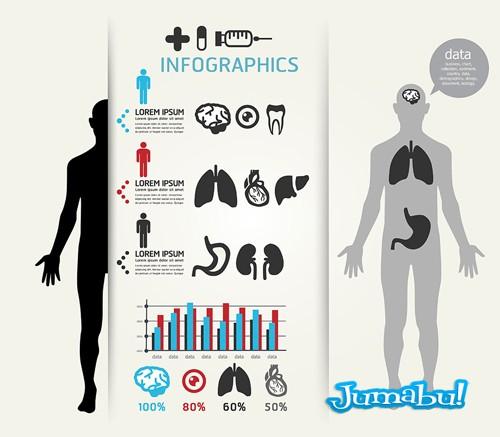 organos-cuerpo-humano-vectorizado