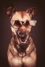 perro-con-anteojos-gracioso