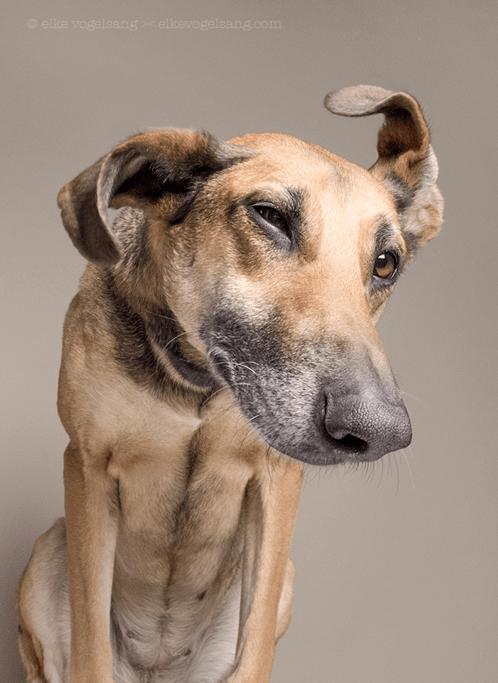 perro-mirando-de-costado