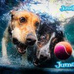 perros amigos pelota1 - Imagenes de Perros Bajo el Agua para Inspirarnos