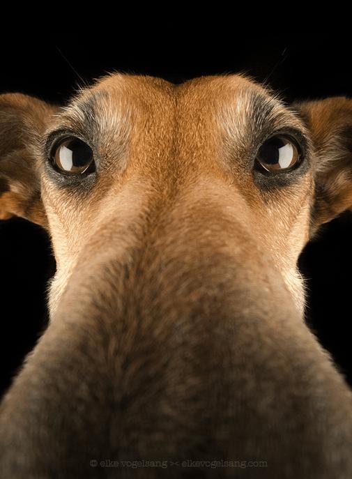 perros-graciosos-nariz