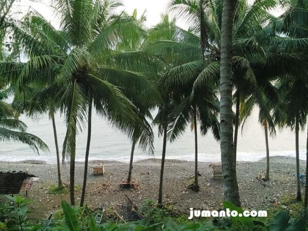 foto pantai terbaya tanggamus lampung dengan pohon kelapanya