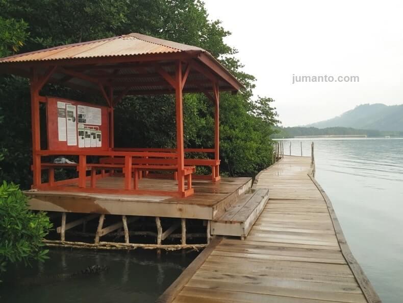 lokasi hutan bakau lampung