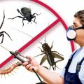 Top Pest Control Tips for Businesses