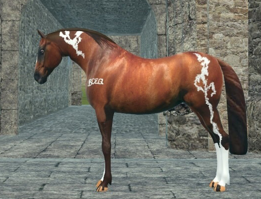 realistic horse breeds # 41