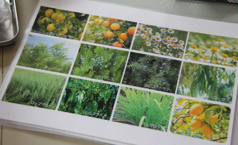 アロマオイルに使われている植物