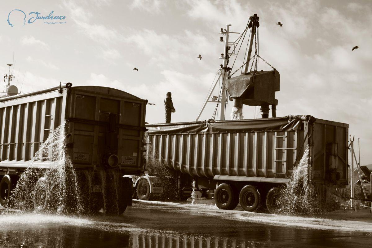 Dingle, Harbour. Men at work