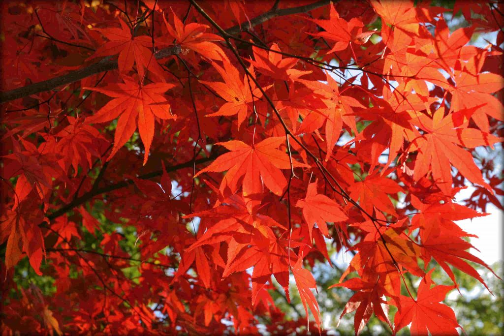 Fall Leaf Iphone Wallpaper L Autunno E La Sua Dimensione Psicologica L Autunno Che