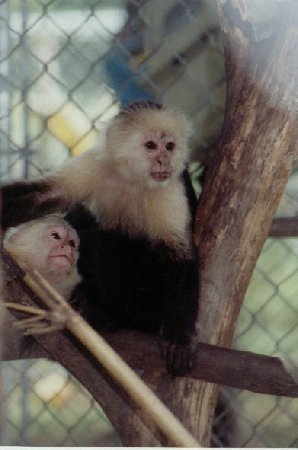 Jungle Friends Primate Sanctuary Where Do Baby Monkeys Come From