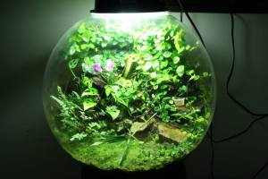 Globe Viviarium