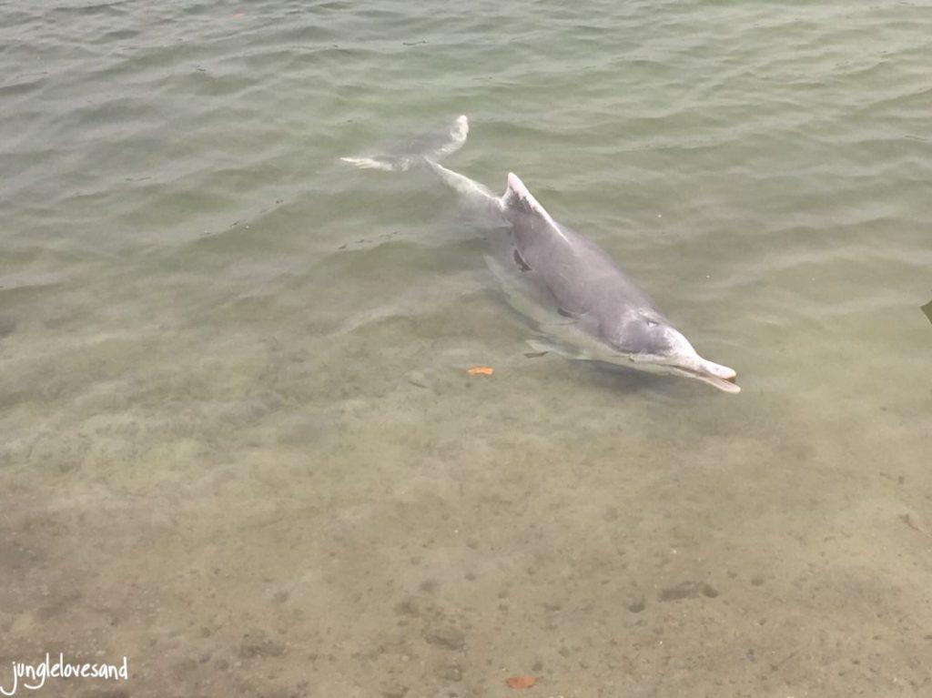 Wilde Delfine am Strand füttern