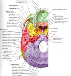 structures passing trough foramen of skull foramen of skullstructures passing trough foramen of skull [ 1447 x 1748 Pixel ]