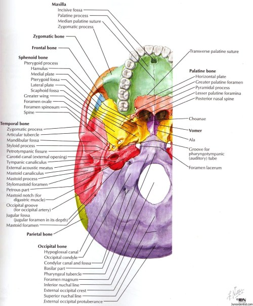 small resolution of structures passing trough foramen of skull foramen of skullstructures passing trough foramen of skull