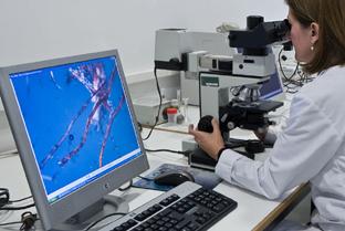 Actividad investigadora en el laboratorio.