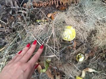 cobrir com folha ou grama seca