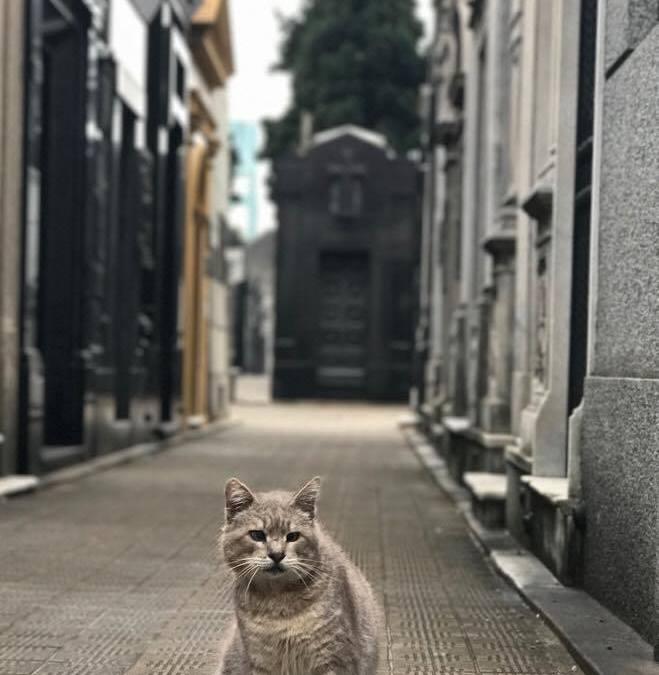 Por que adoramos o bairro Recoleta em Buenos Aires