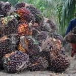 Mulai Oktober | Ekspor CPO Harus Bayar 3 Dollar AS Per Metrik Ton