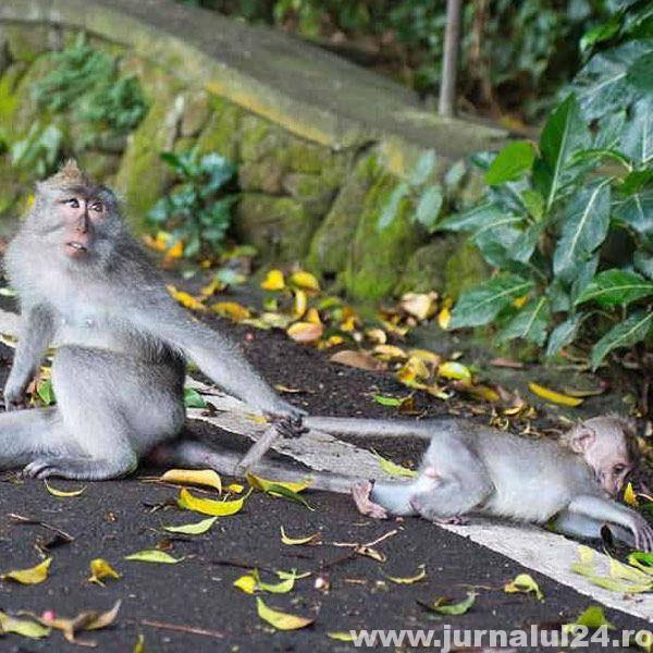 imagine haioasa cu maimute