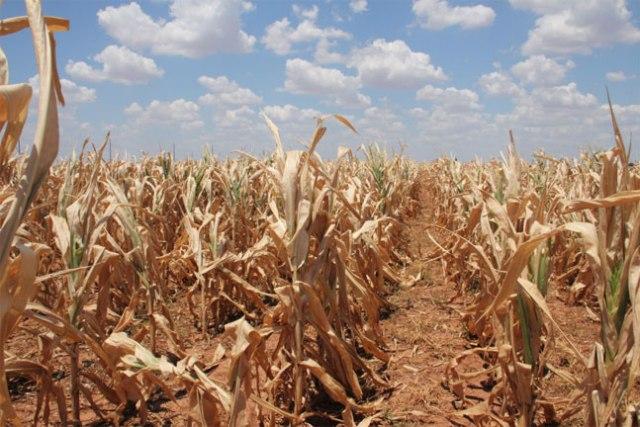 seceta agricultura