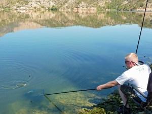 Shane guides his 2lb River Ebro roach over the landing net