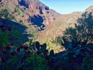 Tal im Inneren von Gran Canaria: schaut ein wenig wie der Gran Canyon aus. Foto: Sascha Tegtmeyer