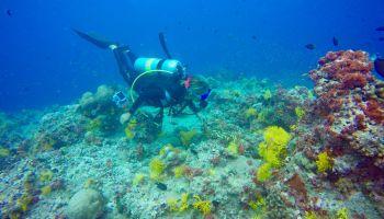 coco palm dhuni kolhu baa atoll tauchen Die gebürtige Mailänderin setzt sich in ihrem Berufsalltag für Schildkröten und Mantas ein – sie hat einige wichtige Schutzprojekte ins Leben gerufen und ist eine der wichtigsten Aktivistinnen, wenn es um den Tier- und Umweltschutz im Inselstaat geht. Foto: Sascha Tegtmeyer