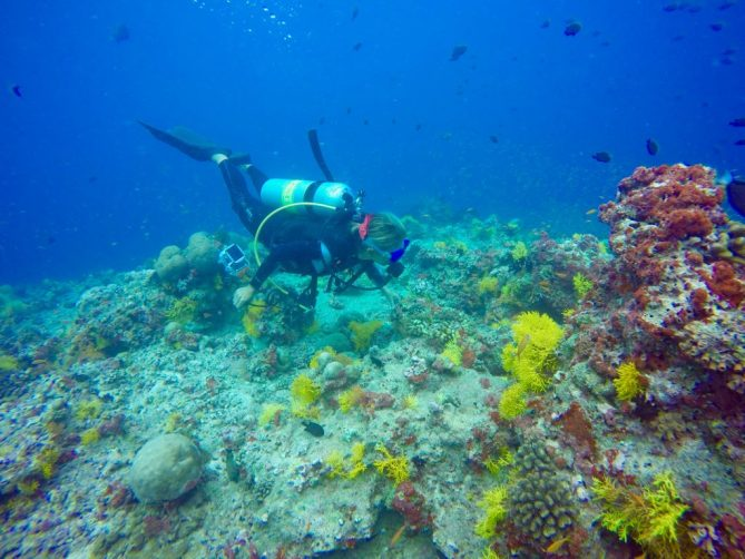 Riesige Artenvielfalt: Meeresbiologin Chiara Fumagalli untersucht das Riff. Foto: Sascha Tegtmeyer