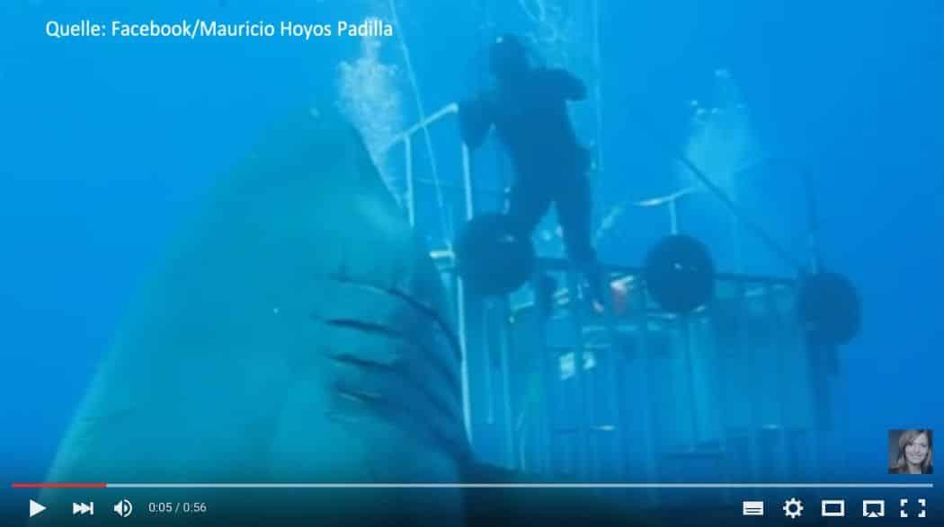 Deep Blue: Größter Weißer Hai aller Zeiten vor der Isla Guadeloupe gefilmt