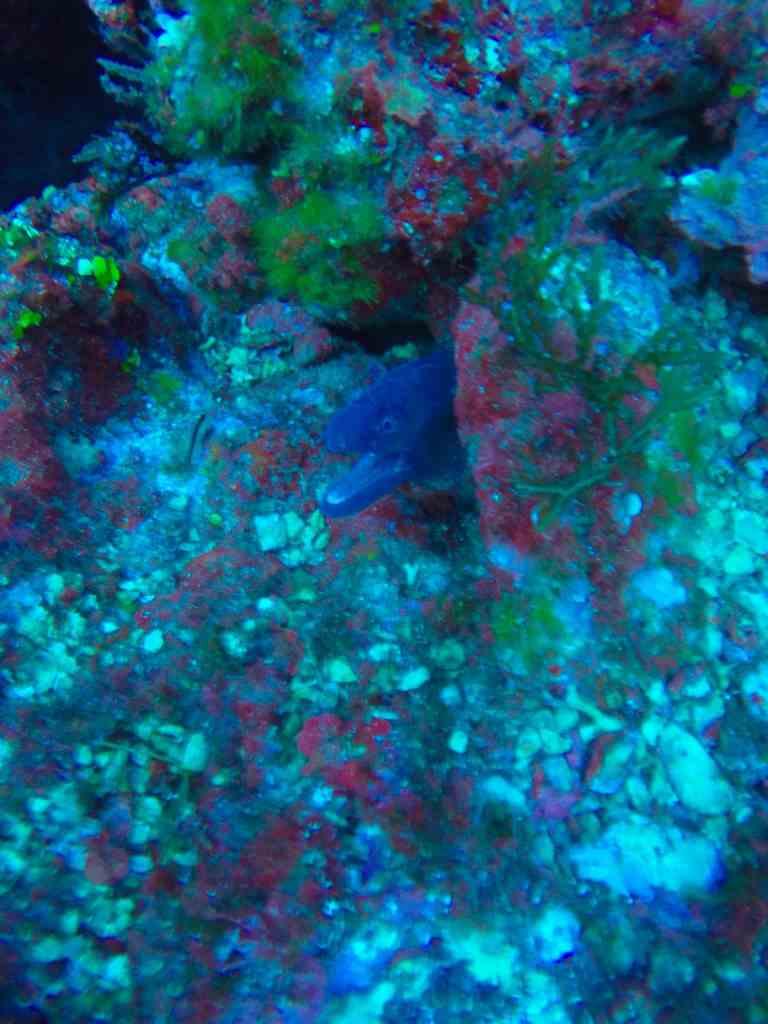 Auch eine Muräne lässt sich an der Isla Dragonera blicken. Foto: Sascha Tegtmeyer tauchen mallorca urlaub reise isla dragonera scuba activa