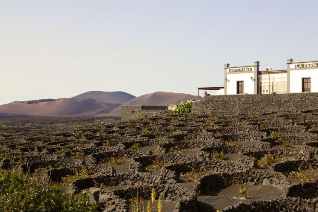 Weinanbaugebiet auf Lanzarote. Foto: S. Tegtmeyer